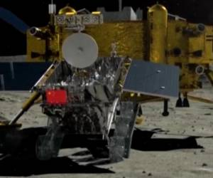 Video: China consigue que una semilla de algodón brote en la Luna